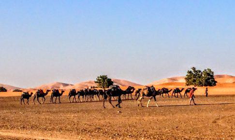 サハラ砂漠ツアー